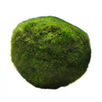 Chladoflora aegagropila, mosbol per stuk