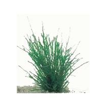 fontinalis antipyretica / bronmos