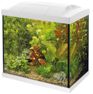 Superfish Start 50 Tropical kit wit
